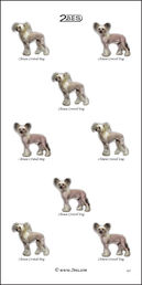 Chinese Crested Dog 029