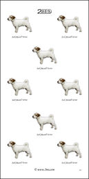Jack Russell Terrier 011