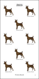Miniature Pinscher 032